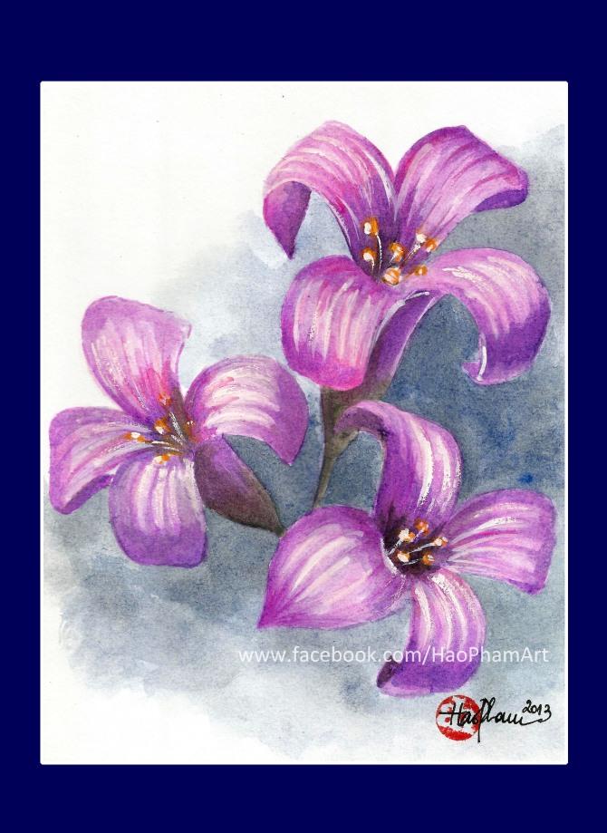 Cactus flower/Hoa xương rồng
